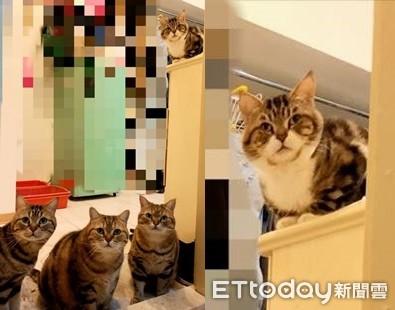 奴才待廁所太久! 4主子「緊盯監視」:不會用貓砂?