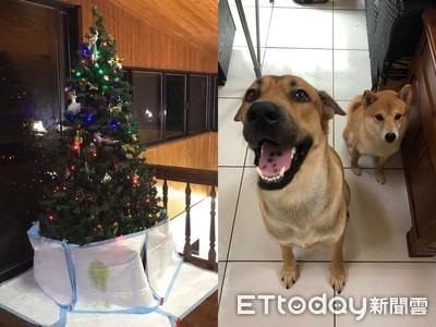 聖誕樹貼滿尿墊 毛孩照抬腿打卡