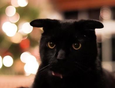 黑喵天生飛機耳 貓緣超差極度邊緣