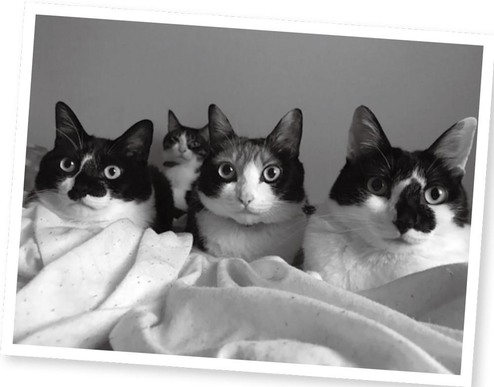▲▼書籍《貓奴的我不推薦養貓の11個理由》。(圖/台灣東販提供,請勿隨意翻拍,以免侵權。)