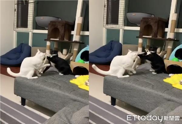 白 貓 破解