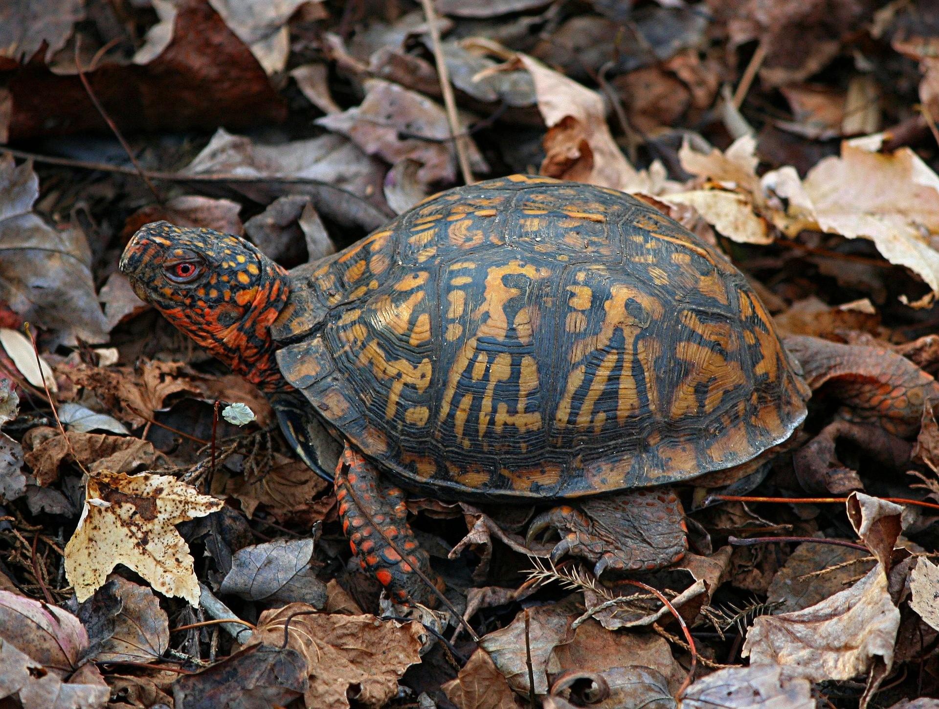 ▲烏龜。(圖/取自免費圖庫Pixabay)
