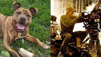 1萬個家庭拒養牠 「最孤獨的狗」遇上爆破王 亂入電影還找到家