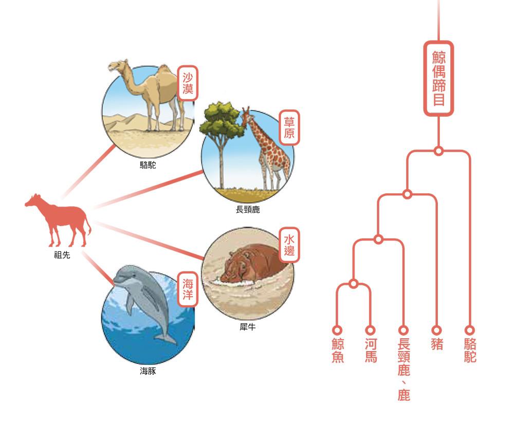 ▲▼書籍《動物的滅絕與進化圖鑑》。(圖/台灣東販提供,請勿隨意翻拍,以免侵權。)