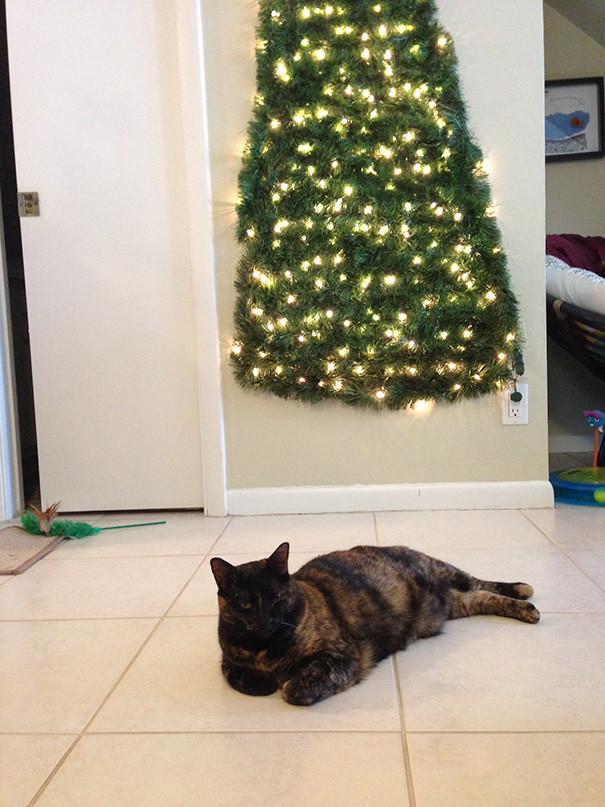 ▲▼聖誕樹 。(圖/深海大花枝提供,請勿隨意翻拍,以免侵權。)