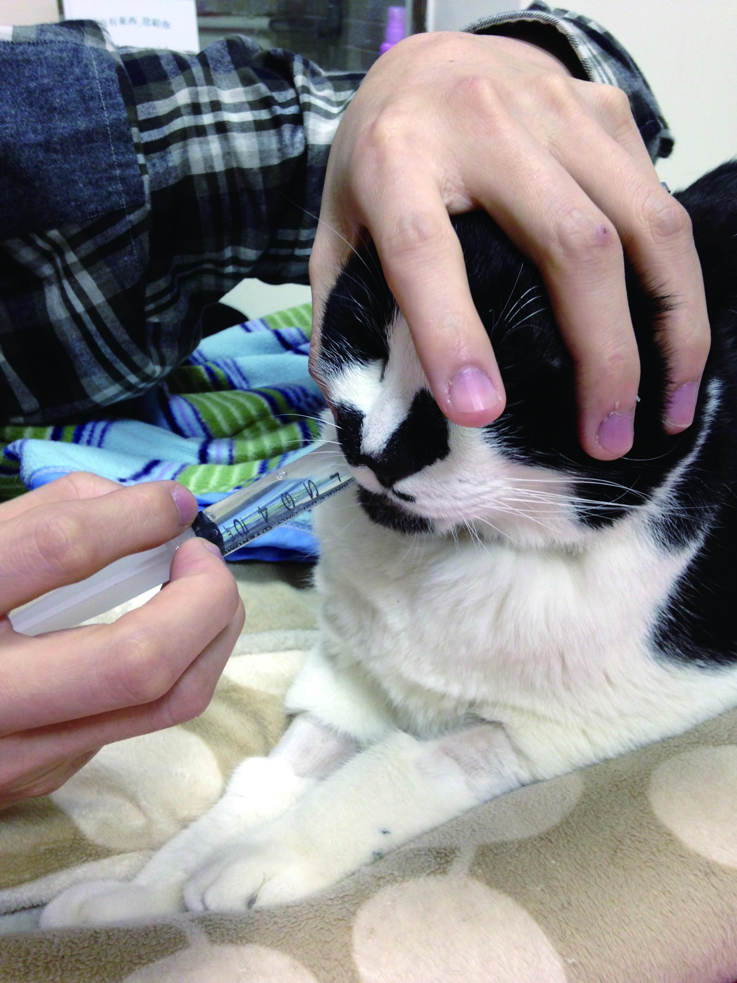 ▲▼ 《有貓的生活》。(圖/四塊玉文創提供,請勿隨意翻拍,以免侵權。)