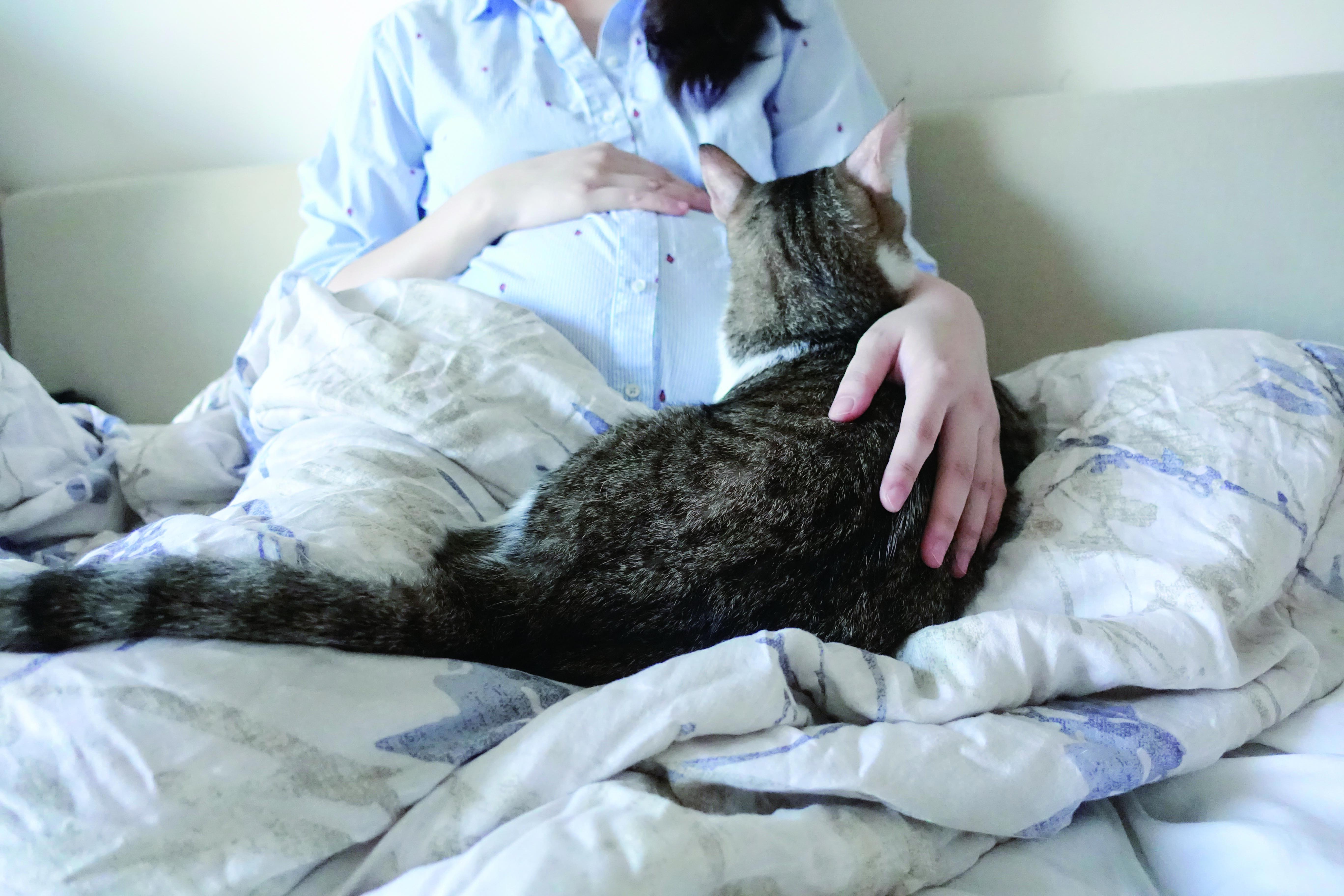 ▲▼《我的貓系生活》。(圖/四塊玉文創提供,請勿隨意翻拍,以免侵權。)