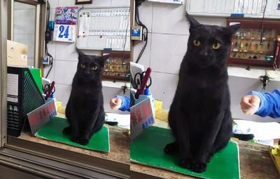 肚子餓來值班!黑貓坐警衛室監督
