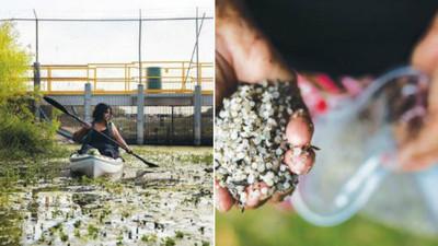 河裡塑膠比魚多!晶瑩剔透「美人魚眼淚」卻是生態殺手 每年4.2噸流進黑海