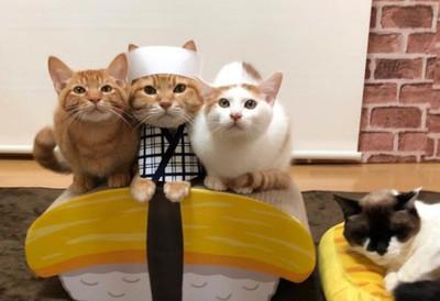 今晚想吃哪種壽司?Cosplay喵皇又出新招
