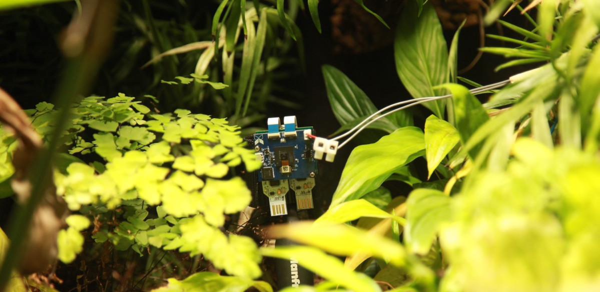 ▲植物發電,Xnor,。(圖/翻攝自Blog/Xnor.ai)