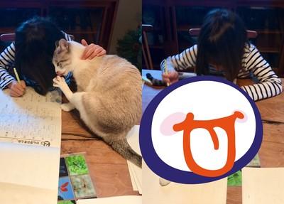 貓咪出招刷存在 打斷妹妹寫作業