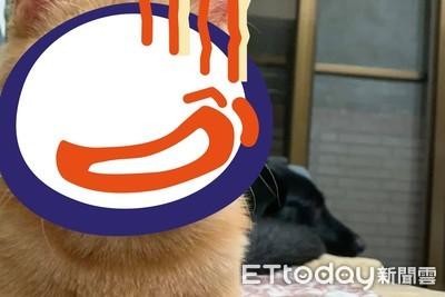 橘貓4個月「滿月臉」占螢幕一半