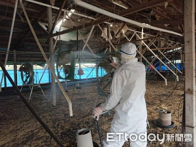 台南市撲殺第2例禽流感雞隻