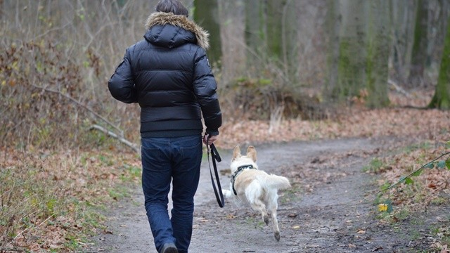 ▲▼遛狗。(圖/取自免費圖庫Pixabay)