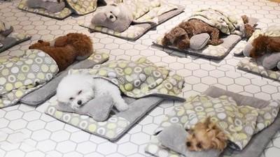 幼犬版「托嬰中心」照片曝光!超乖一起蓋被被睡午覺 網熱議:太神奇了