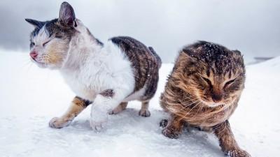 無畏寒風!北海道攝影師為家鄉浪貓拍寫真:生命力超強大