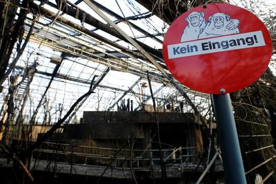 德國動物園跨年夜大火 30多隻猩猩被燒死