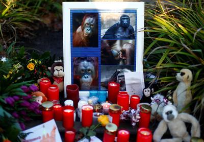 德國動物園猿猴館失火 只救出2隻黑猩猩