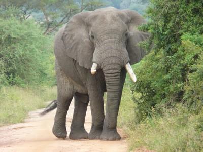 脖子四肢都斷 飼主遭大象分屍