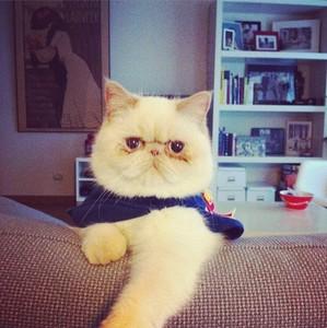 無論喜怒哀樂都一號表情的「臭臉貓」