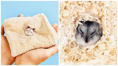 眼睛瞇成一線「倉鼠手帕」!神複製埋在木屑中的睡相 反面還有彩蛋