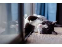 大年初一「別睡午覺」!10大禁忌要注意 來年超好運
