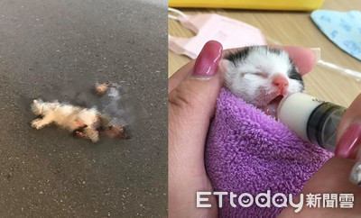 同胎只剩牠!貓媽遭撞胎兒噴出亡