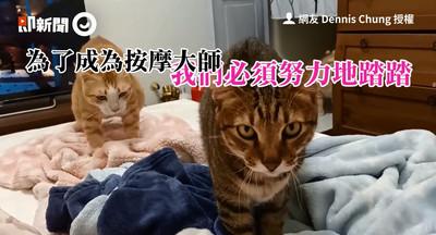 2貓睡前對毛毯「四手連踏」萌炸