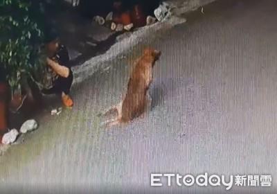 計程車輾過!黃狗慘叫拖後腿爬行