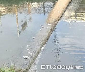 魚屍綿延1公里!惡廠商偷排廢水釀悲劇