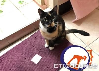 貓開窗叼東西討拍 紅包袋嚇壞媽