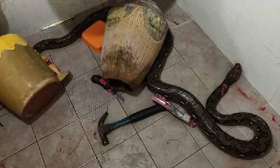 媽上廁所被蛇咬傷 兒子拿刀大戰