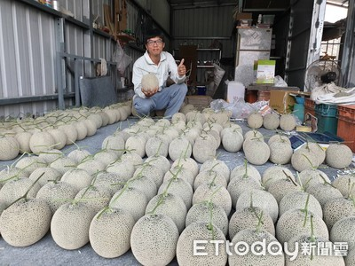 房仲改行種網紋洋香瓜 產品供不應求