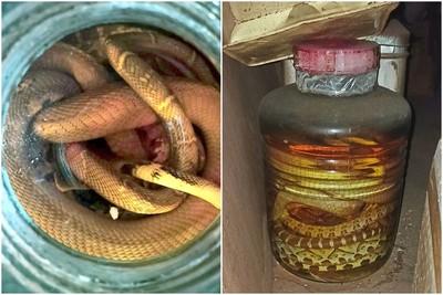 整理驚見30年蛇酒!他好奇問「還能喝嗎?」曝開甕氣味