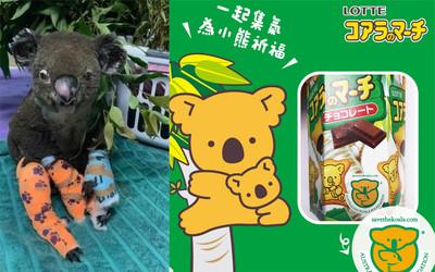吃小熊餅乾救無尾熊?家樂福小編證實