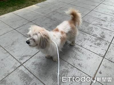 搬家遇陌生狗裝熟 還進電梯跟上樓