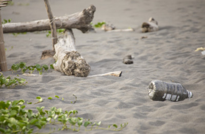 「燈泡奶茶始祖」對海洋超有愛