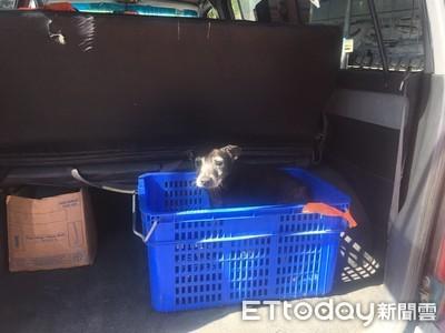毛小孩跌落大海 海巡東港警民動員搶救