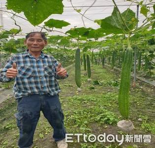 60年如一日 高樹簡清貴愛種「角瓜」