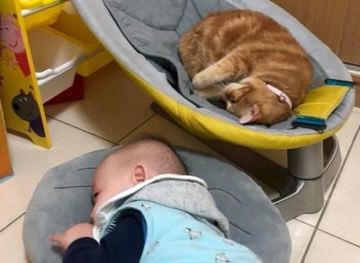 喵皇佔搖搖椅 弟躺抱枕互換床位
