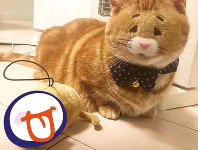 橘貓跟玩偶換臉無違和 網友笑翻