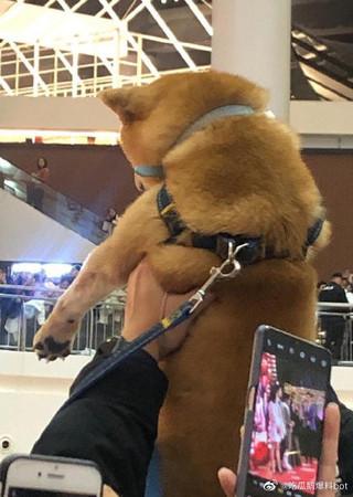 ▲人海之中突然有隻狗狗被舉在空中。(圖/翻攝自微博/吃瓜鵝爆料bot)