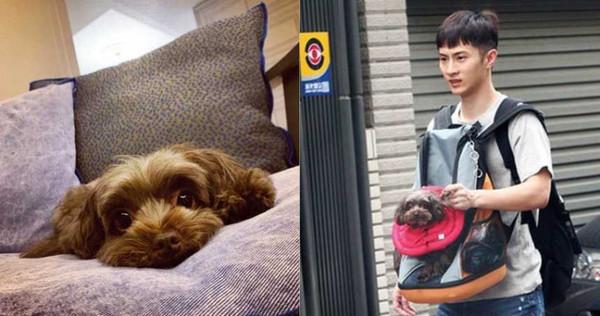 阿本胸前掛著一隻狗狗走出炎家(右圖),那隻狗也曾出現在炎亞綸的IG(左圖)。(圖/本刊攝影組、翻攝自炎亞綸IG)
