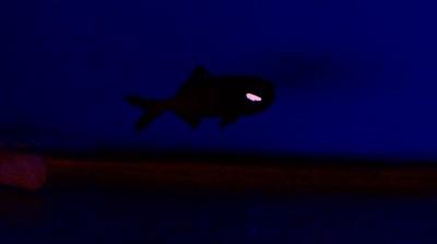 你看到了嗎?過年直衝「屏東海生館」目睹深海魚「放閃」 親子同遊再享優惠