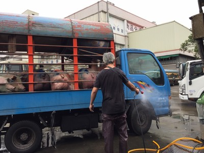 春節豬肉需求量大 動保處加強防疫