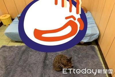 午休幫貓鋪軟毯 轉頭10喵躺滿床