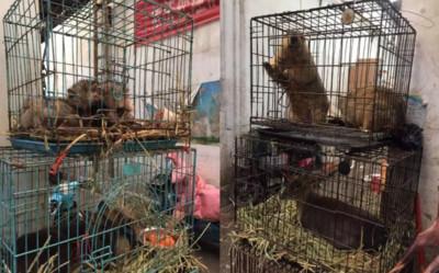 大陸三部門公告「嚴禁野生動物交易、轉運」