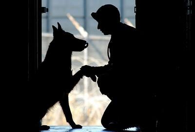 老遊民過世 同伴攜手照顧2浪犬