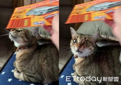 刮刮樂「繞貓頭」必中!實測驚網